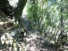 Le vieux sentier en RD en aval de la brèche du Carciara : le chemin avant le canyon