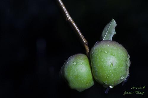 Manzanas majadas