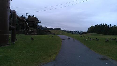 Gasworks Park. More like Gooseworks Park, amirite? by christopher575