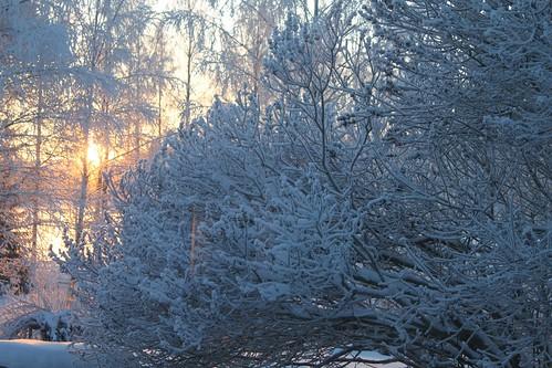 Talvimaisema_1160b