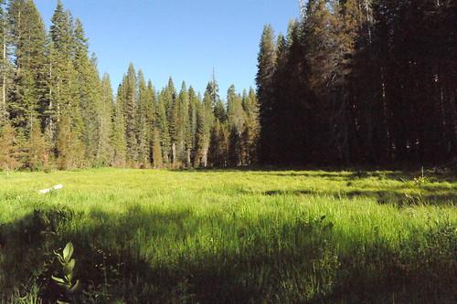 キャンプサイト前の草原
