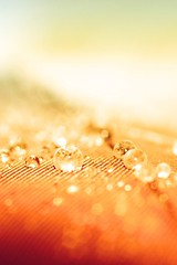 Orange-Drops.jpg