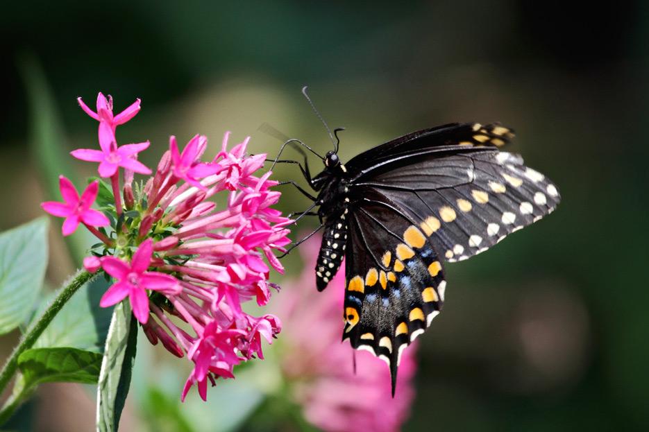 072612_08_butterfly07