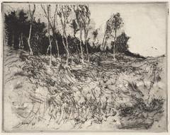 Seven birches II