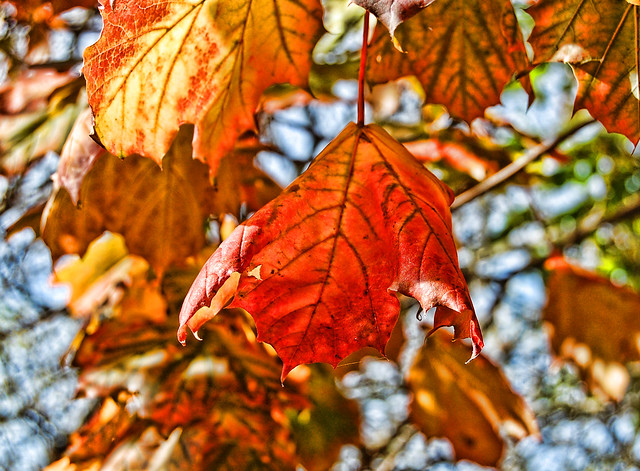 Autumn Leaves por Liz