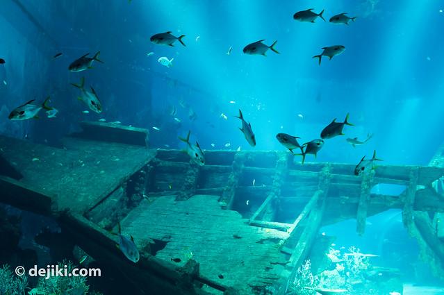 Shipwreck Habitat