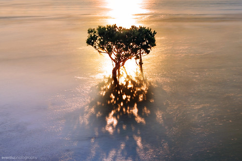 sunset mangrove