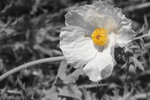 104-365 Wildflower in the Wind