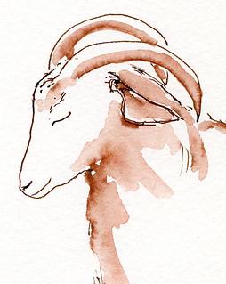 4-15-14 Rent-a-Ruminant goat 1