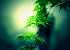 branch, leaf, tree, sunlight, plant, nature, cannabis, macro photography, flora, green, plant stem,