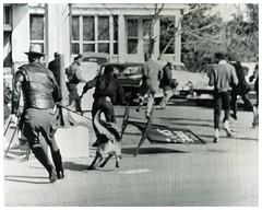 Civil rights demonstrators flee police dogs in Princess Anne: 1964