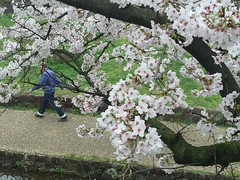 Kyoto Walkway