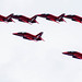 Red Arrows Over Putney by sbisson