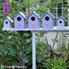 Birdhouses 10