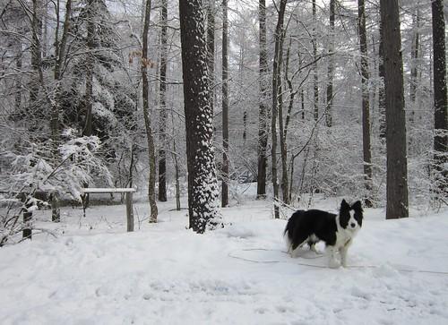また雪景色/庭のランディ 2012年4月1日7:57 by Poran111