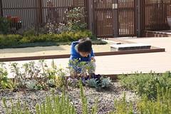 とらちゃん@アトレ恵比寿屋上ガーデン(2012/3/20)