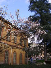 Flowers in Acqui Terme