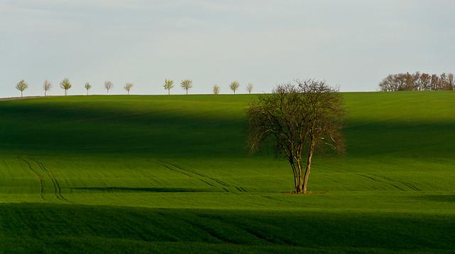 Spring field in Slovakia