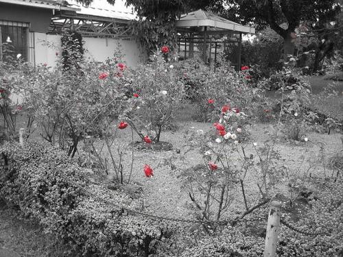 ROMERO_Rose Garden