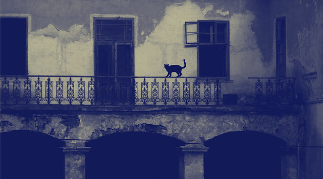 Cat Silhouette on Balcony