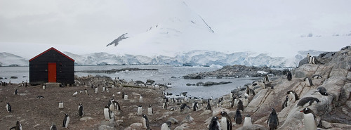Port Lockroy - Gentoo Penguins by Veerle L
