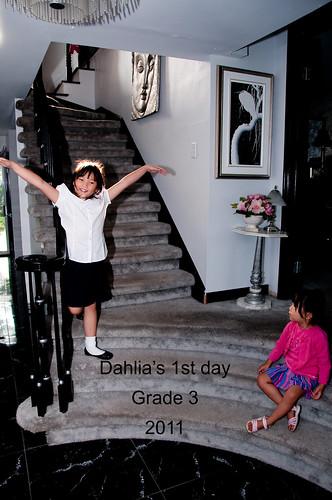 Dahlia 1st day, grade 3 008