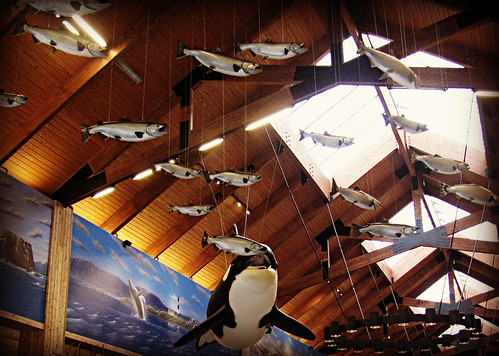 06-24-12 Indoor Whale Watching by roswellsgirl