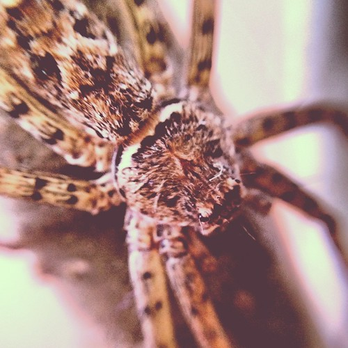Spider (181/366) by elawgrrl