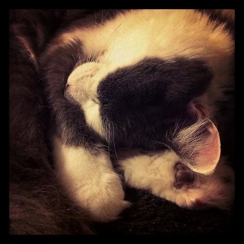 July 1: Snoring kitteh by MeganMorris