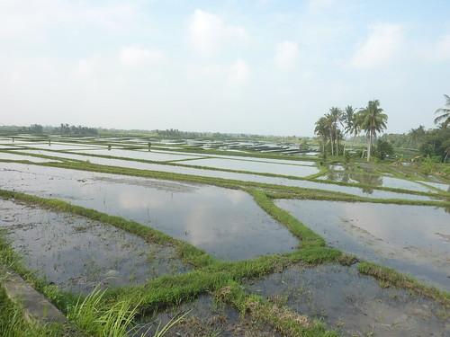 Bali-Route Legian-Jatiluwih (11)