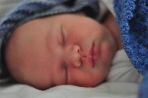 cedar,10 days old