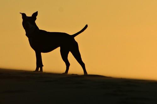 Koira Sunset