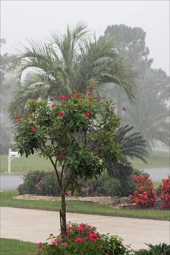 Rainstorm tree