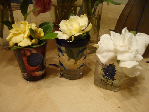 gardenia: stages of life