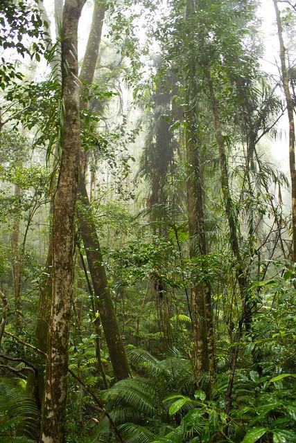 Rain forest, QLD