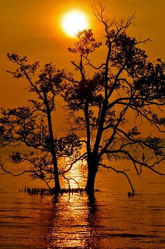 sunset sea tree bird silhouettes johor muar thegalaxy westmalaysia mygearandme