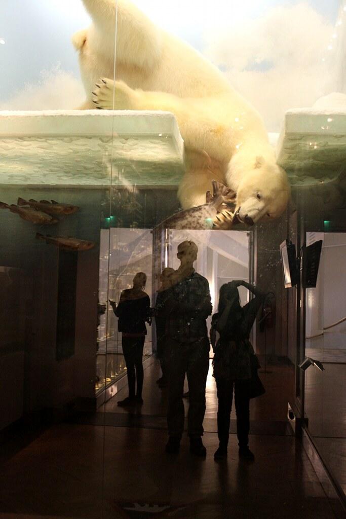jääkarhunen