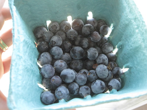 Ontario Blueberries