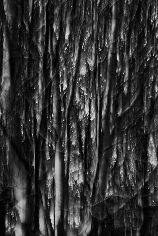 Birch-Portrait-B&W