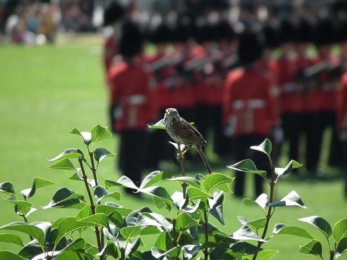 Little Bird and the Changing of the Guard at Parliament Hill, Ottawa (2012) by Gustavo Thomas