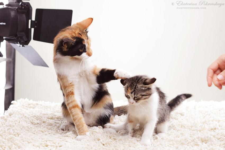 kittens_02