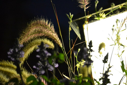 Night weeds