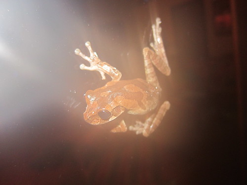 Frog on the window!