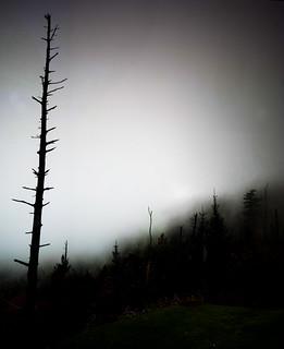 Fog Abstract