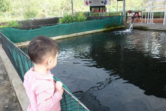 Mainland Tropical Fish Farm Koi Pond