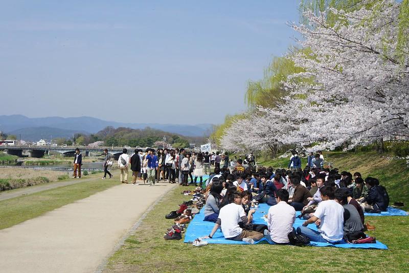 Students Hanami Picnic, Kamogawa
