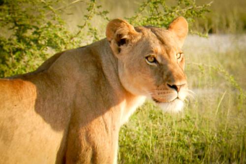Botswana 2016 - Moremi