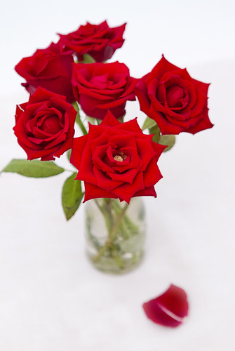 無料写真素材, 花・植物, 薔薇・バラ, 花瓶