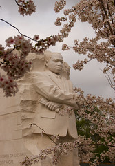 MLK Blossoms