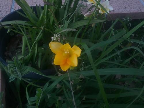 A jealous flower